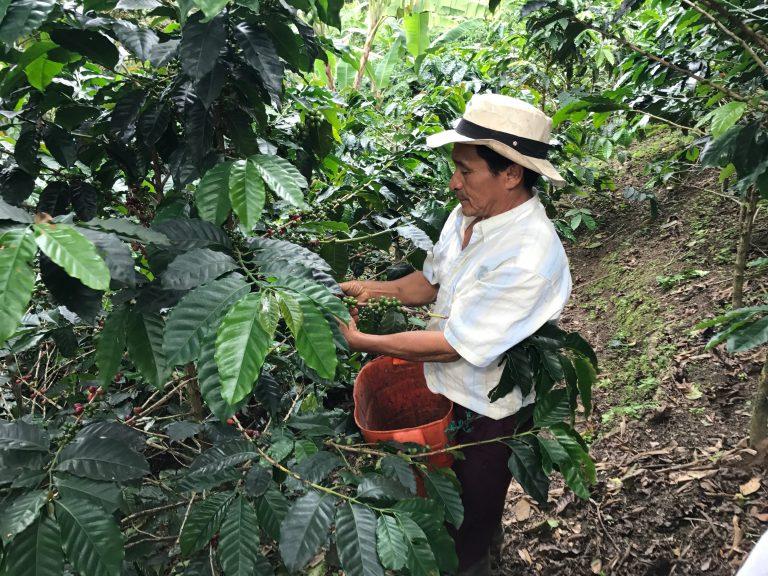 Coffee farmer in Quindio, Colombia